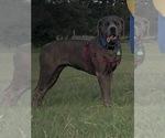 Small #17 Breeder Profile image