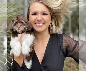 Main photo of Chihuahua Dog Breeder near HOUSTON, TX, USA