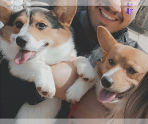 Main photo of Pembroke Welsh Corgi Dog Breeder near MC DONOUGH, GA, USA
