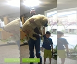 Caucasian Shepherd Dog Breeder in KUNA, ID, USA
