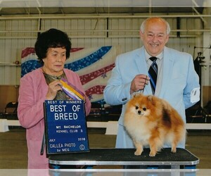 Main photo of Pomeranian Dog Breeder near SALEM, OR, USA