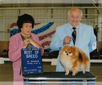 Pomeranian Breeder in SALEM, OR, USA