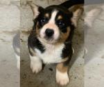 Small #5 Breeder Profile image