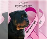Rottweiler Breeder in HOUSTON, TX, USA