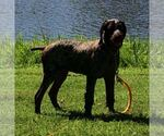 Small Photo #9  Breeder Profile in PARSONS, KS, USA