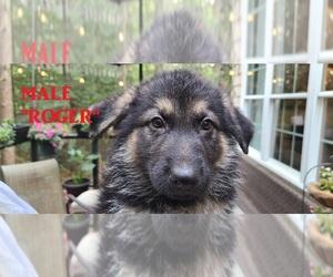 German Shepherd Dog Dog Breeder in WOOD RIVER JT,  USA