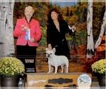 French Bulldog Breeder in EMMETT, ID, USA