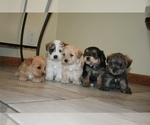 Small Photo #3  Breeder Profile in BLACK FOREST, CO, USA