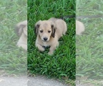 Small Photo #6  Breeder Profile in HEMPSTEAD, TX, USA