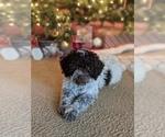 Small Photo #25  Breeder Profile in AGUA DULCE, CA, USA