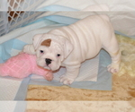 Small #43 Breeder Profile image