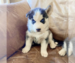 Small Photo #5  Breeder Profile in BLACK FOREST, CO, USA