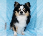 Small Photo #14  Breeder Profile in BELLE CENTER, MO, USA
