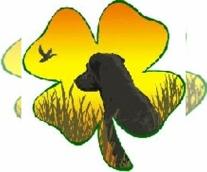 Labrador Retriever Dog Breeder in MINDORO,  USA