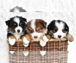 Small Photo #11  Breeder Profile in CHICKASHA, OK, USA