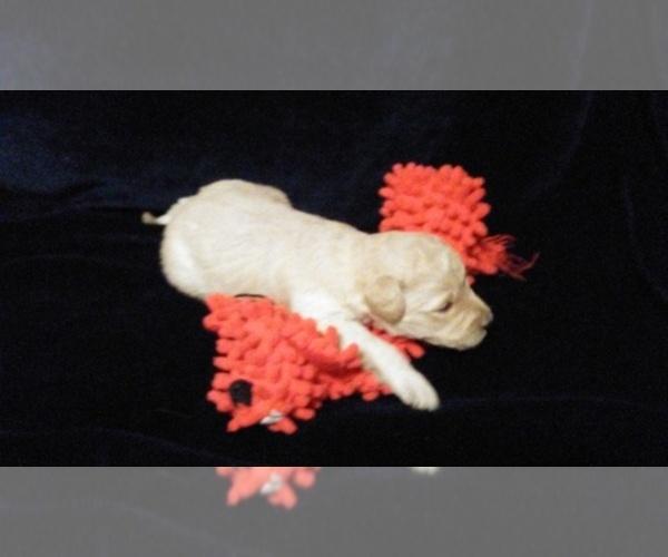 Medium Photo #10  Breeder Profile in NORTH LIBERTY, IN, USA