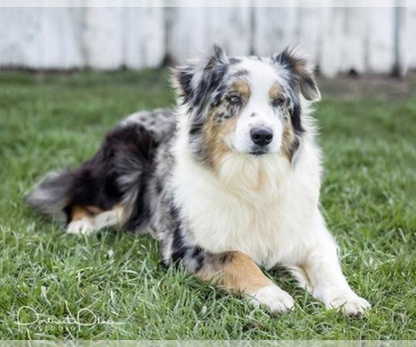 Medium Photo #6  Breeder Profile in ROBERTS, IL, USA
