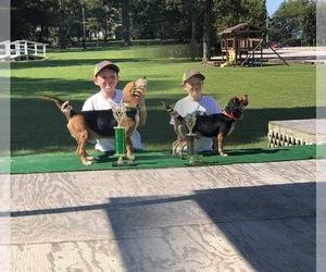 Beagle Dog Breeder near HARVIELL, MO, USA