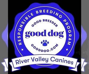 Whippet Dog Breeder near ELDORA, IA, USA