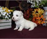 Small #93 Breeder Profile image