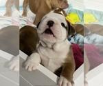 Small #110 Breeder Profile image