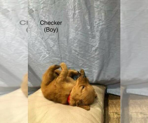 Medium Photo #1  Breeder Profile in CEDAR GAP, MO, USA