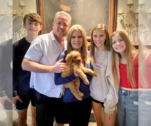 Goldendoodle-Poodle (Standard) Mix Dog Breeder in HOUSTON,  USA
