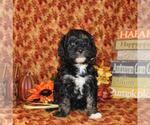 Small #18 Breeder Profile image