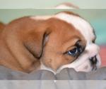 Small #33 Breeder Profile image