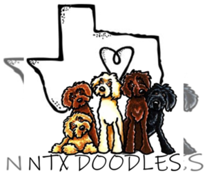 Main photo of Goldendoodle Dog Breeder near DENISON, TX, USA