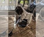 Small Photo #12  Breeder Profile in AGUA DULCE, CA, USA