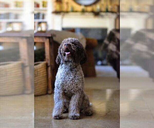 Medium Photo #33  Breeder Profile in AGUA DULCE, CA, USA