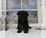 Small #61 Breeder Profile image