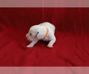 Dalmatian Dog Breeder near KATY, TX, USA