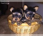 Small Photo #1  Breeder Profile in PATERSON, NJ, USA