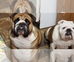 Small Photo #7  Breeder Profile in MACON, GA, USA