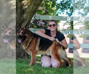 German Shepherd Dog Dog Breeder in SPRING GROVE,  USA