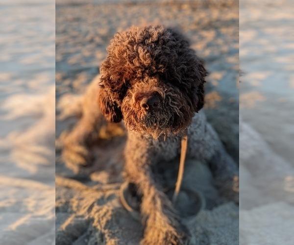 Medium Photo #32  Breeder Profile in AGUA DULCE, CA, USA