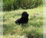 Small #78 Breeder Profile image