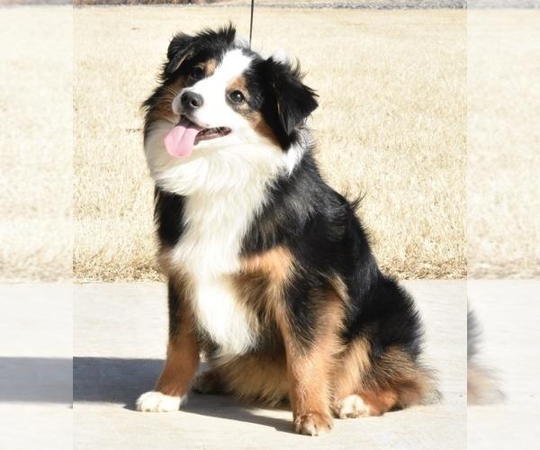 Medium Photo #3  Breeder Profile in CHICKASHA, OK, USA