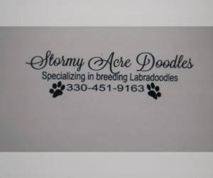 Main photo of Labradoodle Dog Breeder near ATWATER, OH, USA