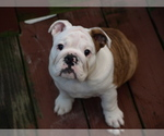 Small Photo #2  Breeder Profile in MACON, GA, USA