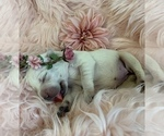 Small Photo #3  Breeder Profile in GLENDALE, CA, USA