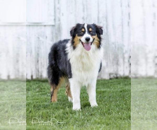 Medium Photo #14  Breeder Profile in ROBERTS, IL, USA