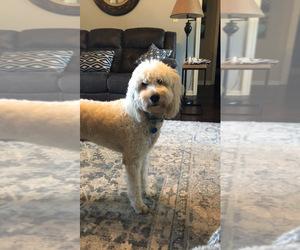 Golden Retriever Dog Breeder in ENDERS,  USA