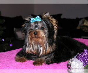 Cavalier King Charles Spaniel Dog Breeder in OKLAHOMA CITY,  USA
