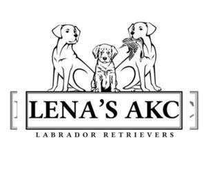 Labrador Retriever Dog Breeder in WELLFORD,  USA