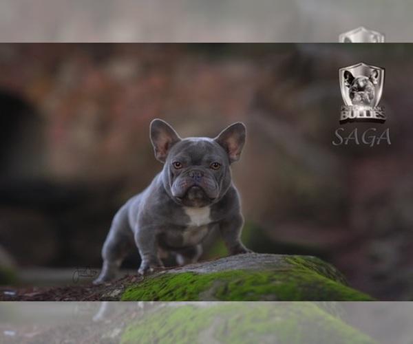 Medium Photo #1  Breeder Profile in FRESNO, CA, USA