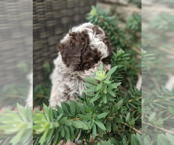 Medium Photo #28  Breeder Profile in AGUA DULCE, CA, USA