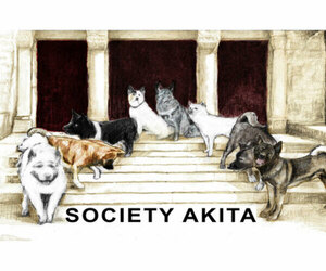 Main photo of Akita Dog Breeder near RALEIGH, NC, USA